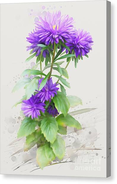 Canvas Print featuring the painting Purple Aster by Ivana