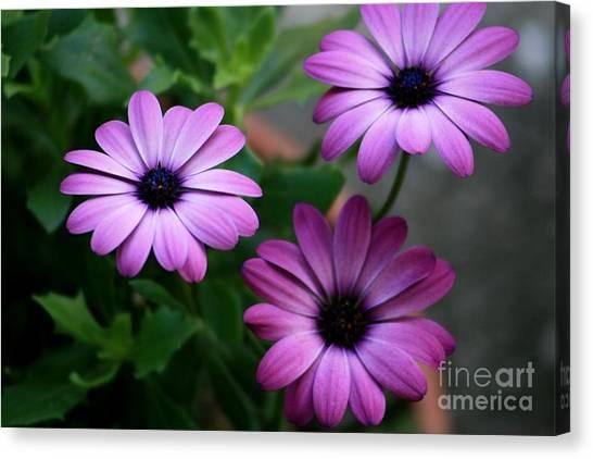 Purple Beauty Canvas Print by Valia Bradshaw