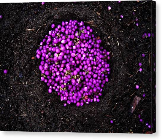 Purple Berries Canvas Print by Lizzie  Johnson