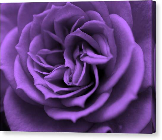 Purple Bliss Canvas Print
