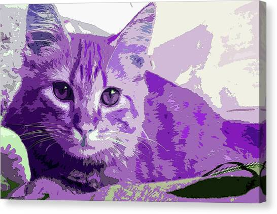 Purple Cat Canvas Print
