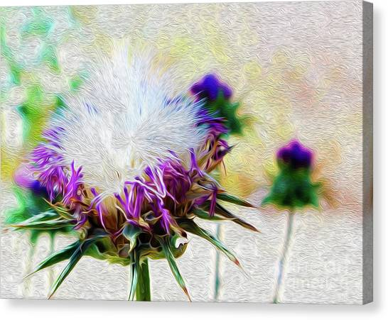 Purple Chaparral  Canvas Print