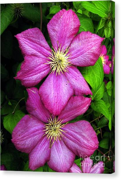 Purple Clematis 2 Canvas Print