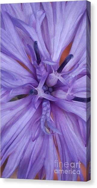 Purple Colorado Wildflower In Macro Canvas Print