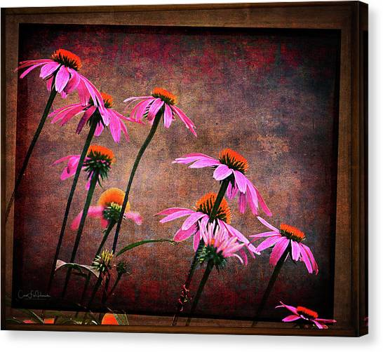 Purple Coneflowers Out Of Alignment  Canvas Print