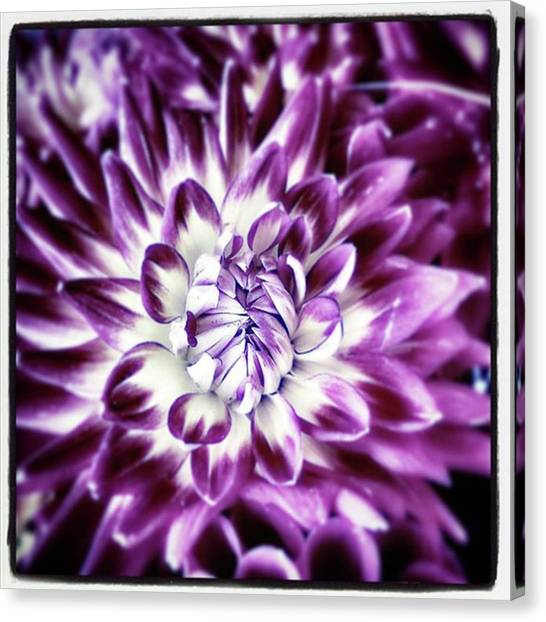Canvas Print featuring the photograph Purple Dahlia. A Color Variation Of The by Mr Photojimsf