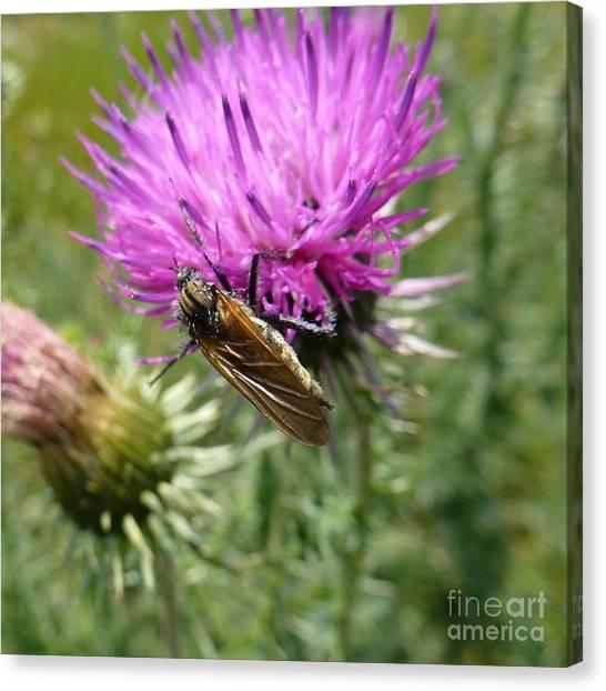 Purple Dandelions 1 Canvas Print