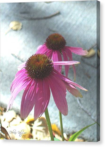 Canvas Print featuring the photograph Purple Echinacea by Deleas Kilgore