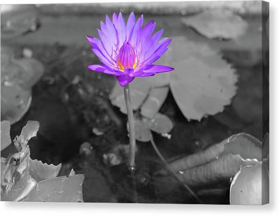 Purple Enlightened Lotus Canvas Print