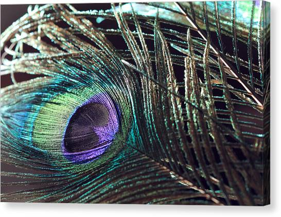 Purple Feather With Dark Background Canvas Print