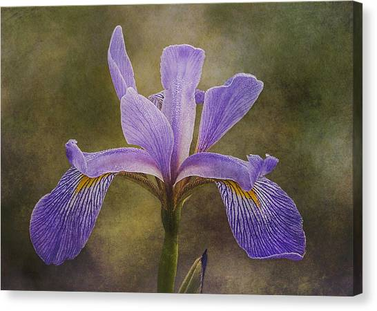 Canvas Print featuring the photograph Purple Flag Iris by Patti Deters