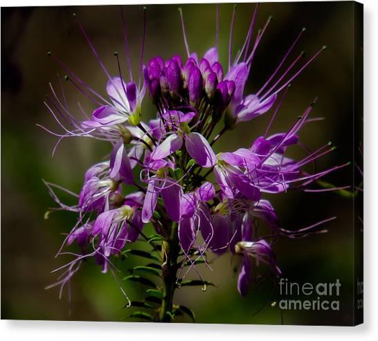 Purple Flower 1 Canvas Print