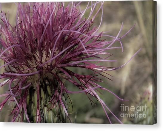 Purple Flower 2 Canvas Print