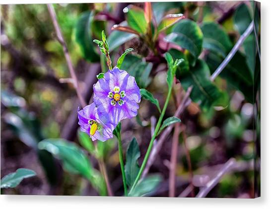 Canvas Print featuring the photograph Purple Flower Family by Alison Frank