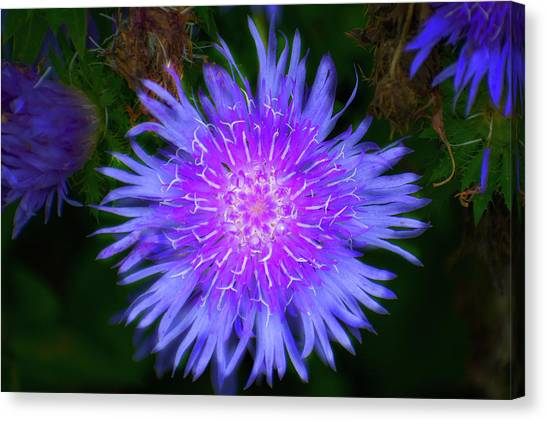 Purple Flower From Mars Canvas Print
