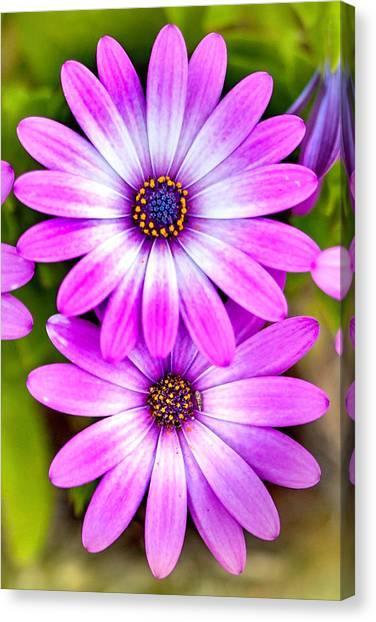 Greeting Canvas Print - Purple Flowers by Az Jackson
