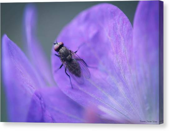 Purple Fly Canvas Print