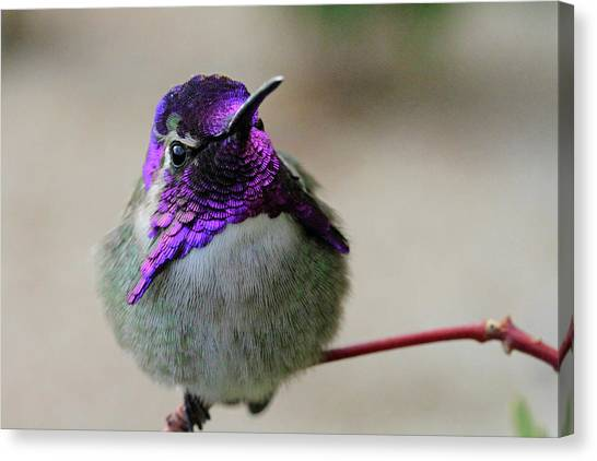 Purple Head Canvas Print