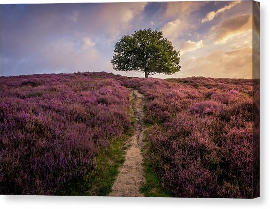 Purple Hill Canvas Print