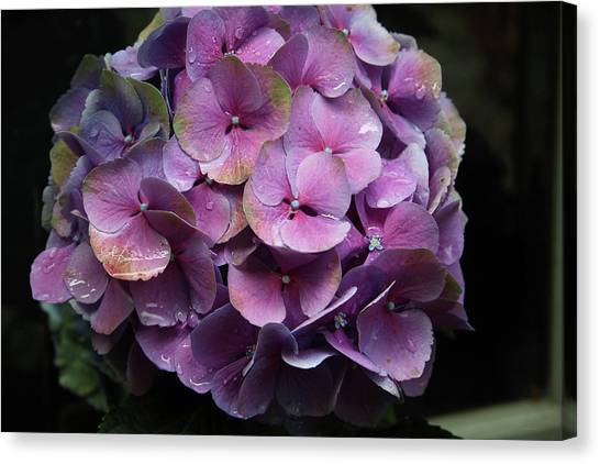Garden Canvas Print - Purple Hydrangea- By Linda Woods by Linda Woods