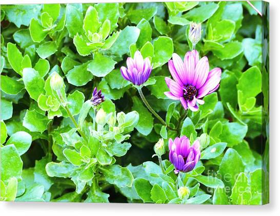 Purple In Greenery Canvas Print