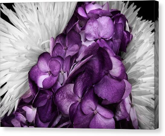 Purple In The White Canvas Print