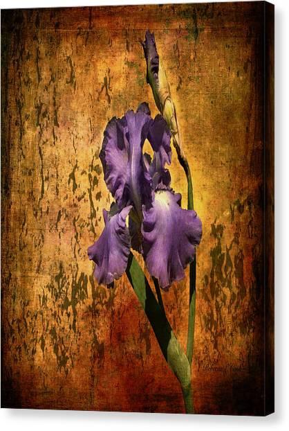 Purple Iris At Sunset Canvas Print