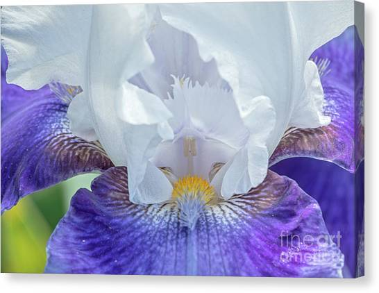 Canvas Print featuring the photograph Purple Iris by Craig Leaper