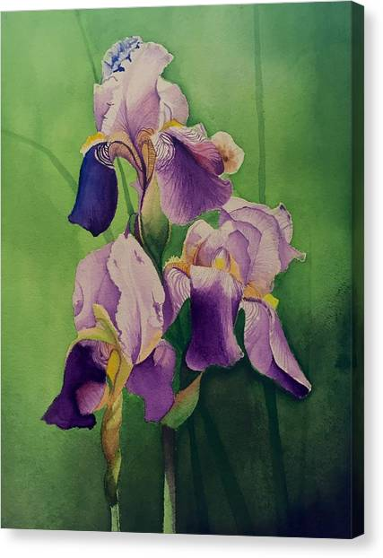 David Hoque Canvas Print - Purple Iris' by David Hoque