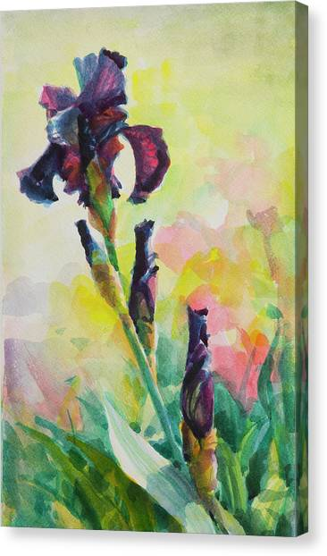 Irises Canvas Print - Purple Iris by Steve Henderson