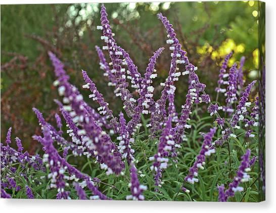 Purple Lavender Canvas Print by Liz Santie