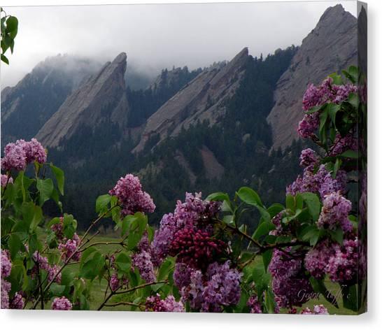 Purple Lilacs Flatirons Canvas Print