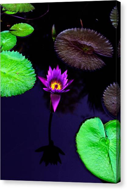 Floral Canvas Print - Purple Lily by Gary Dean Mercer Clark