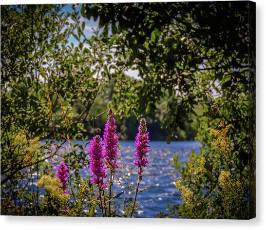 Canvas Print featuring the photograph Purple Loosestrife In The Irish Countryside by James Truett