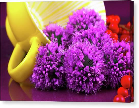 Onions Canvas Print - Purple Onion Flower Macro by Tom Mc Nemar