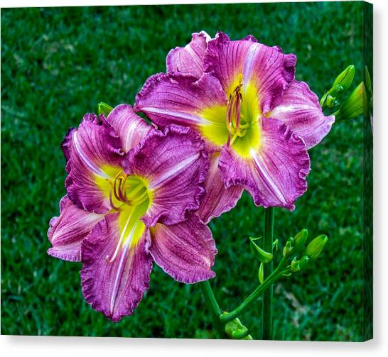 Purple Pair Canvas Print