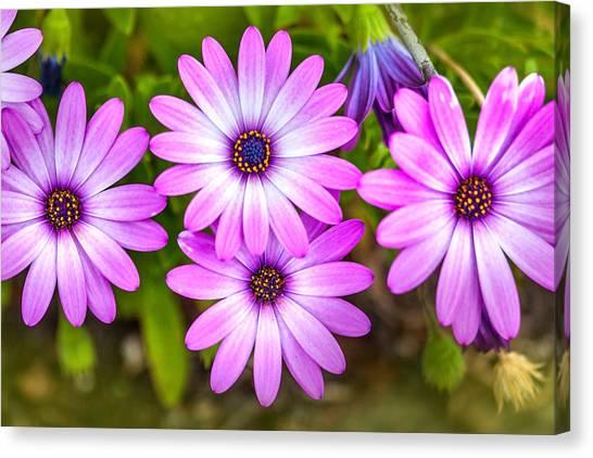 Greeting Canvas Print - Purple Pals by Az Jackson