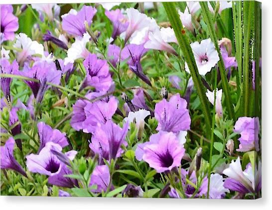 Purple Petunias Canvas Print
