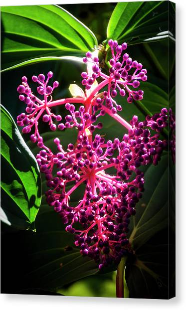 Purple Plant Canvas Print