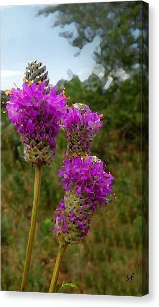 Purple Prairie Clover Canvas Print