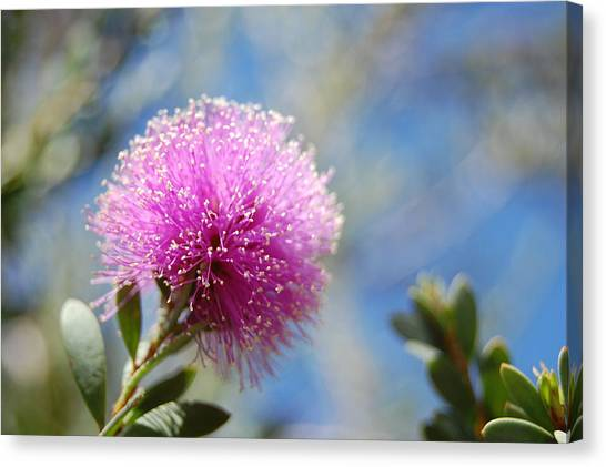 Purple Puff Canvas Print by Jean Booth