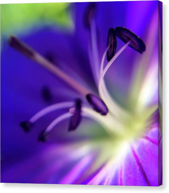 Purple Starburst Canvas Print