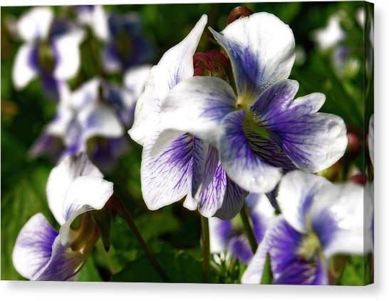 Purple Veins  Canvas Print