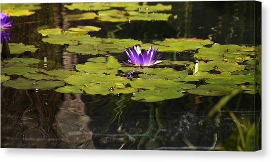 J Paul Getty Canvas Print - Purple Water Lilly Distortion by Teresa Mucha