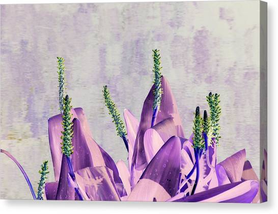 Purple Water Plant Canvas Print