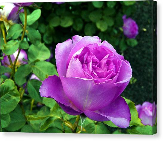 Purple Whisperings Canvas Print by Kendall Eutemey