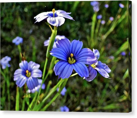 Purple Wildflowers Canvas Print by Liz Vernand