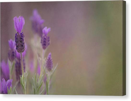 Purple Wings Canvas Print
