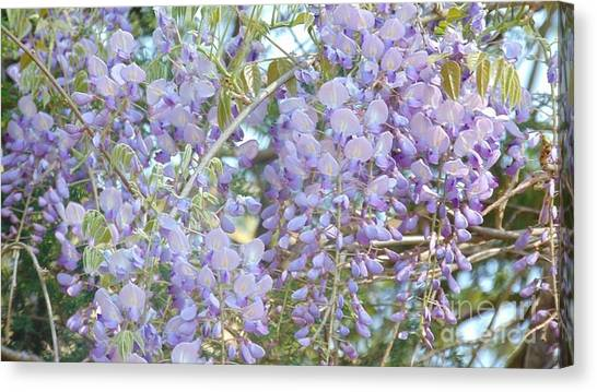 Purple Wisteria Canvas Print