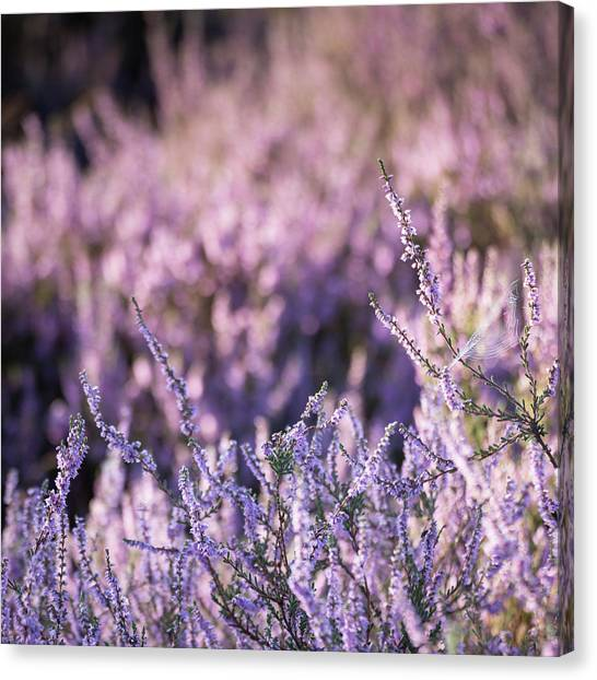 Sherwood Forest Canvas Print - Purples by Chris Dale